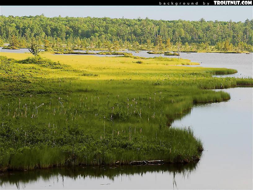 scenic desktop background for download #37