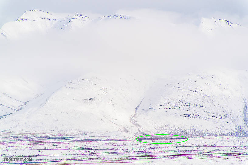 The ant-like specks in the green oval are a herd of about 250 caribou almost 5 miles away.