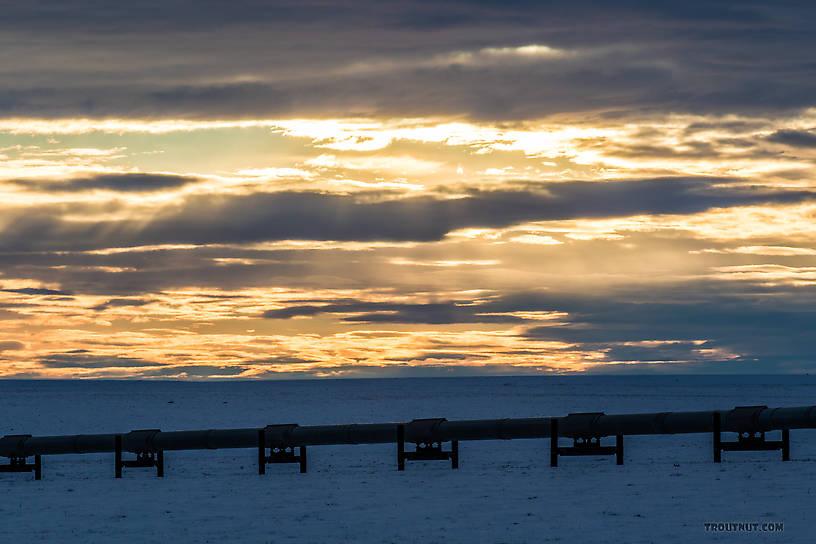 Sunset over the Alaska Pipeline.