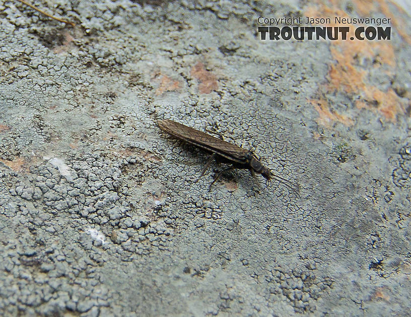 I'm not positive on the ID on this one -- I can't see the defining characteristics well enough to confirm.