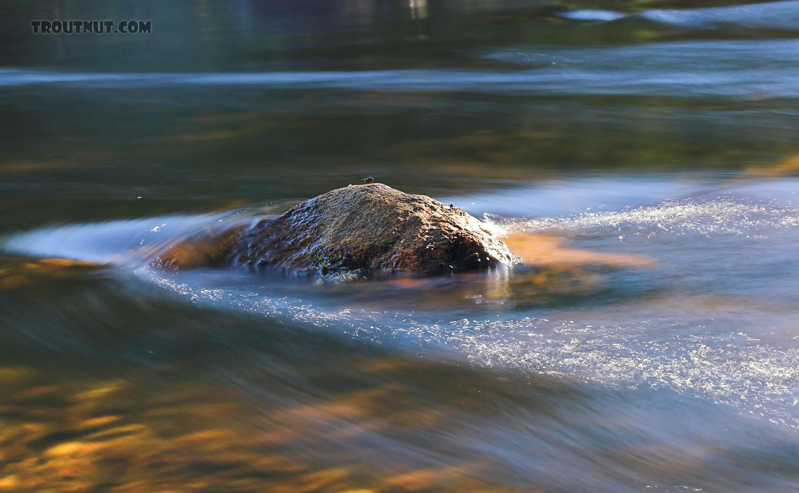 A lone fly rests upon a rock in the middle of a little brook trout stream that's catching the late afternoon sun. From Eighteenmile Creek in Wisconsin.