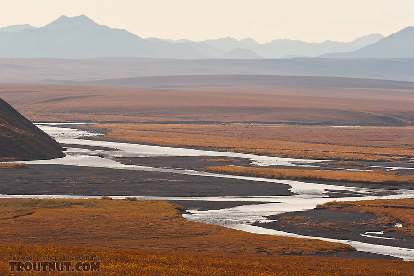 A beautiful braided reach of the Sag River, with the Philip Smith Mountains in the Arctic National Wildlife Refuge (ANWR) in the background. From the Sagavanirktok River in Alaska.