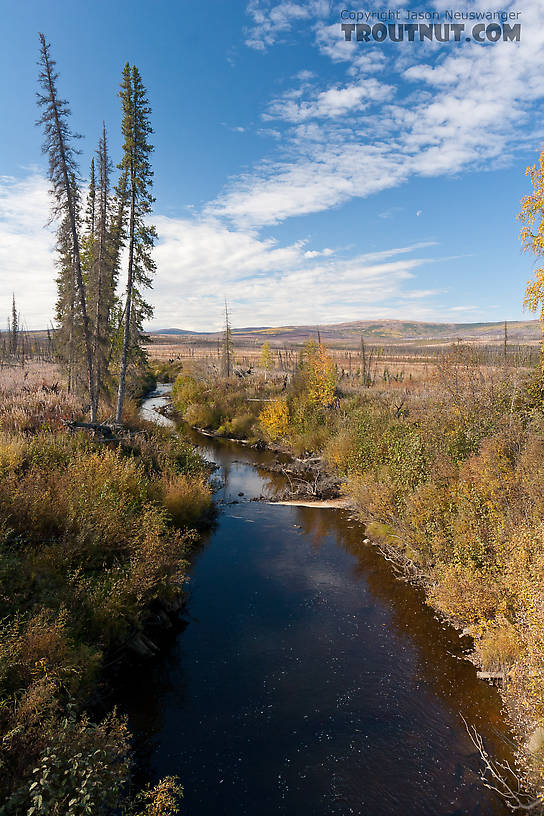 This is one of the first creeks crossed on the Dalton Highway itself, but I can't remember its name. From Dalton Highway in Alaska.