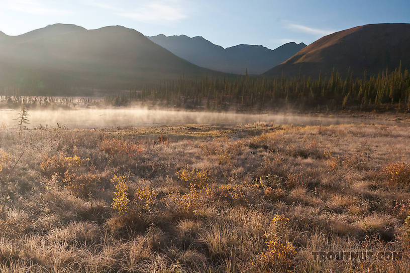 Morning mist over a little marshy pond on the south side of Atigun Pass in the Brooks Range. From Dalton Highway in Alaska.