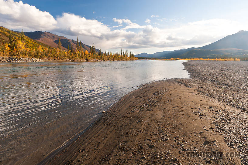 From the Middle Fork of the Koyukuk River in Alaska.