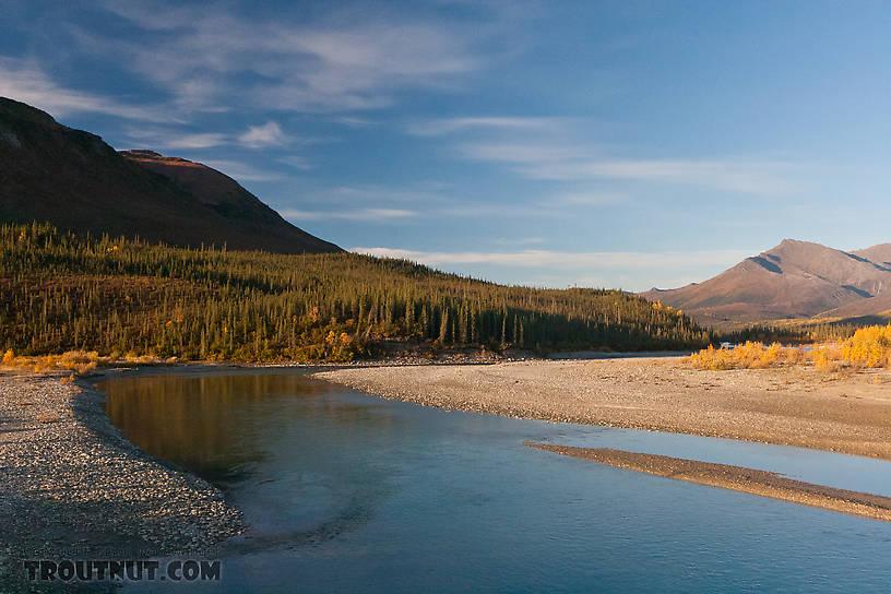 From the Middle Fork of the Koyukuk River in Alaska.