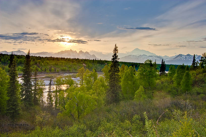 I took this picture on my way home from Homer, from one of the Denali overlooks on the Parks Highway a ways north of Talkeetna.  That is an amazing drive at all times of year, and spring is no exception.  The highest, most distant mountain visible is Denali / Mount McKinley, while the rest of the Alaska Range rises over the Chulitna River in the foreground. From Parks Highway in Alaska.