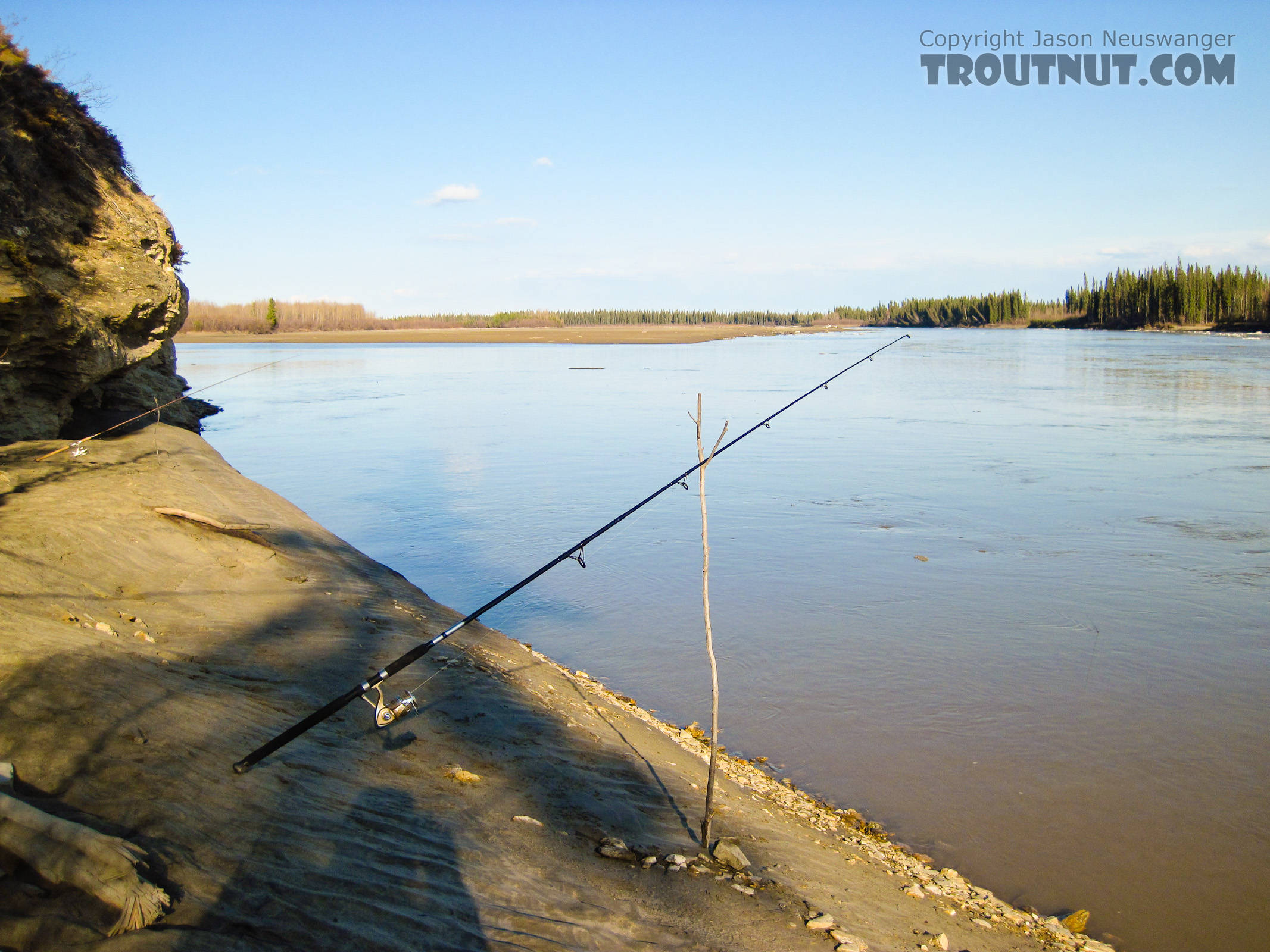 Typical set-up for burbot fishing: throw the heavily weighted bait in and sit around until something happens.  This calm eddy off the edge of the main channel was relatively free of ice. From the Tanana River in Alaska.