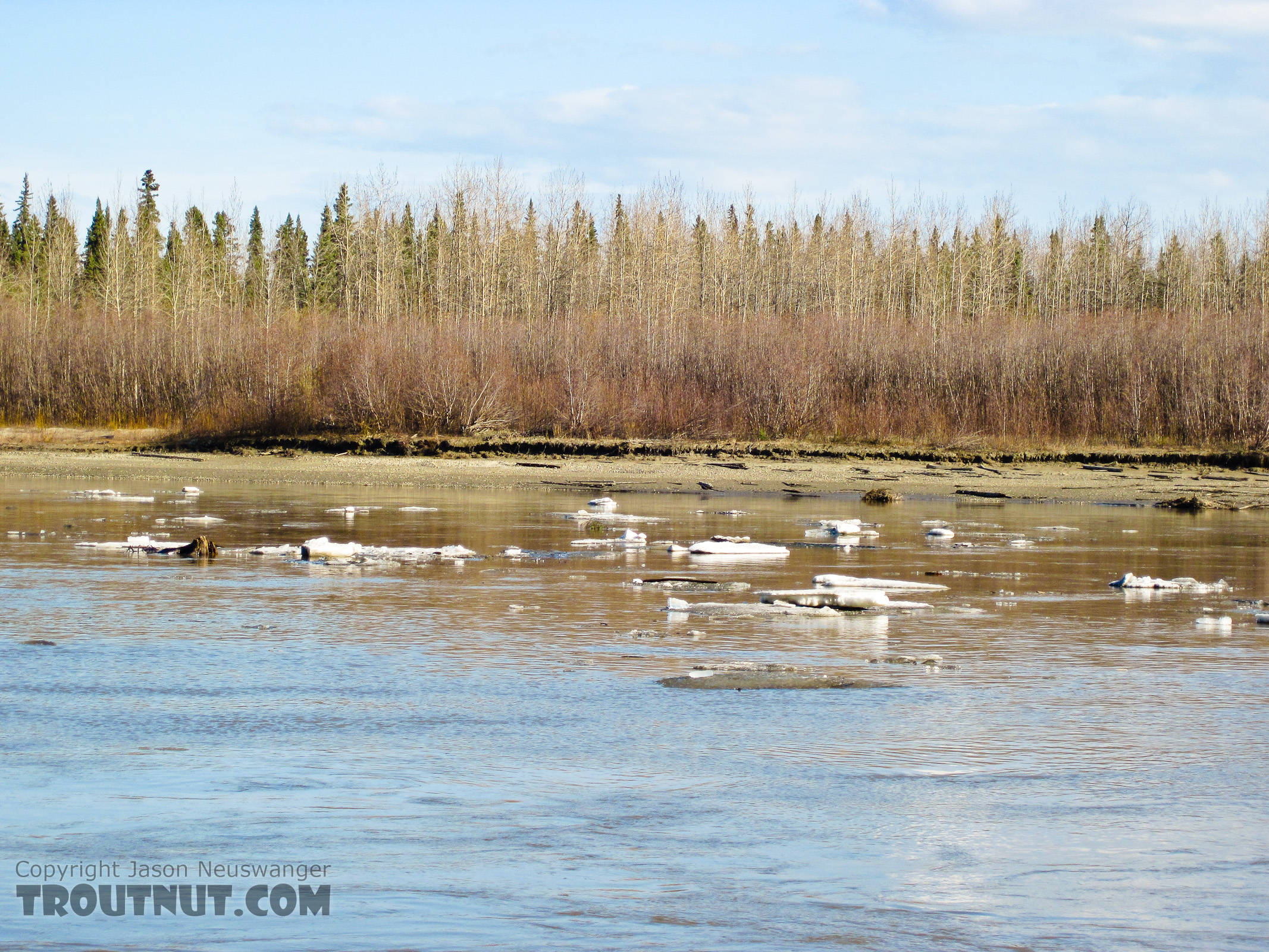 Here's what the main channel looked like on this trip.  The tributaries up in the hills look like this, or worse.  Early May isn't fly fishing season yet in interior Alaska. From the Tanana River in Alaska.