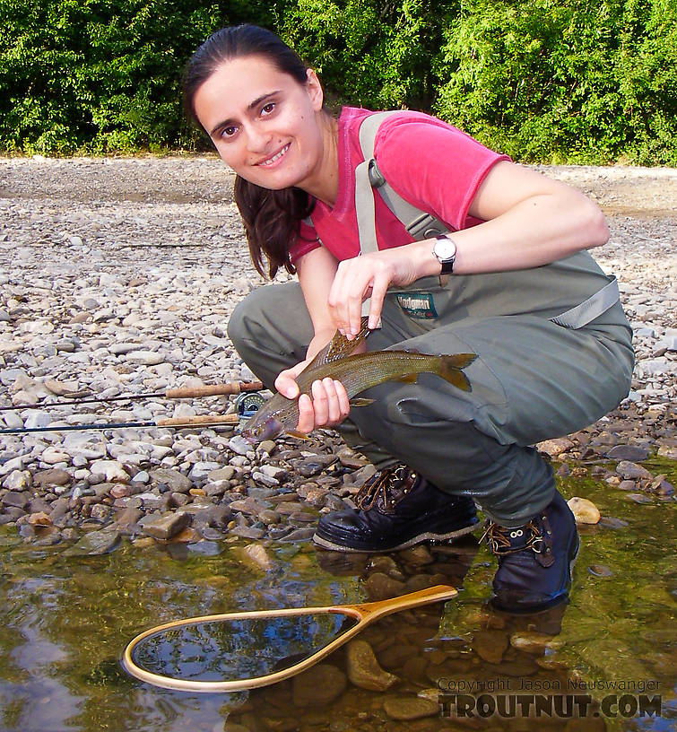 My wife's first Arctic grayling... beautiful!  And so is the fish. From the Chena River in Alaska.