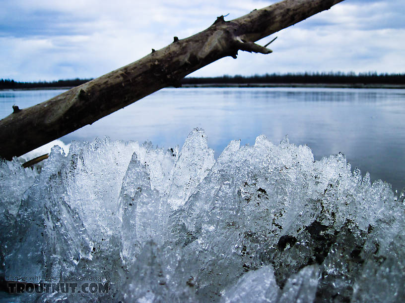 This is what a lot of the remaining river ice looks like right now, laying in massive chunks up on the bank.  Kick it and it shatters into a million little shards. From the Tanana River in Alaska.