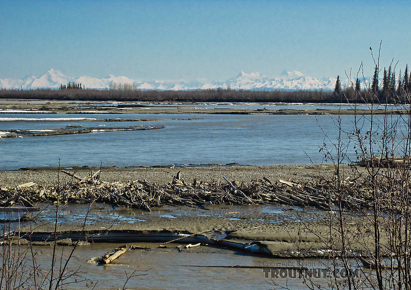 The Tanana offers several nice views of the high peaks of the Alaska Range. From the Tanana River in Alaska.