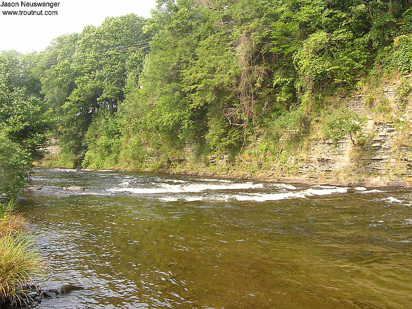 The salmon river for Salmon fishing in ny