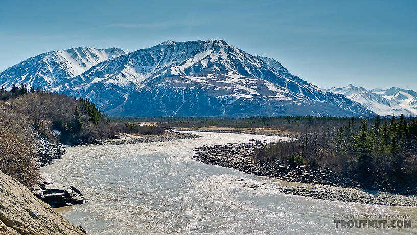 From the Delta River in Alaska.