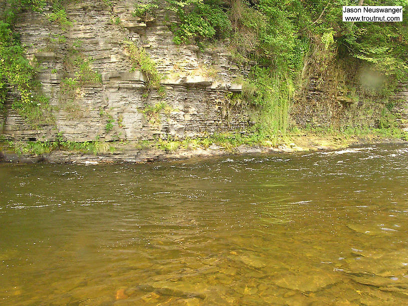 Thousands of big trout and salmon pass by here each year. From the Salmon River in New York.