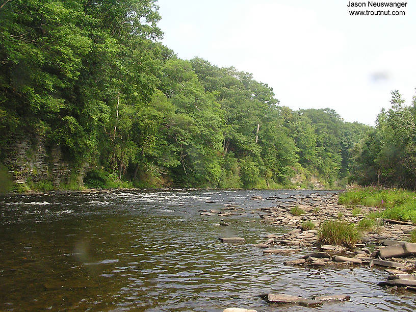 From the Salmon River in New York.