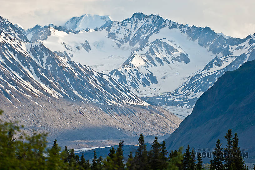 From Gunnysack Creek in Alaska.