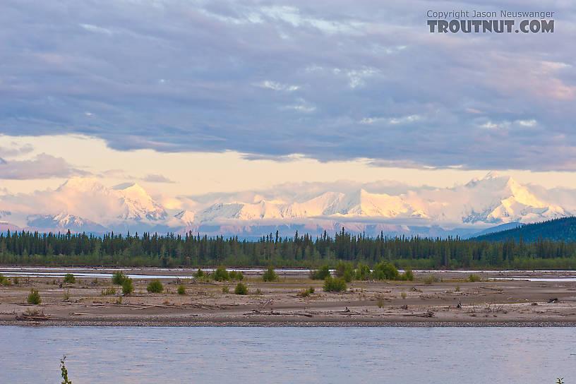 From the Tanana River in Alaska.