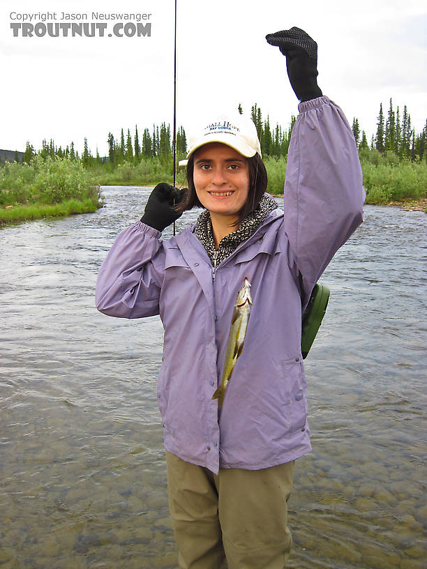 The first fish on a fly of 2011 for either of us, and she caught it while I was still rigging up my rod. From Nome Creek in Alaska.