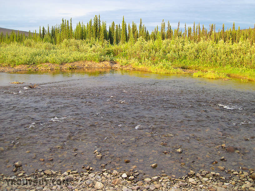 From Nome Creek in Alaska.