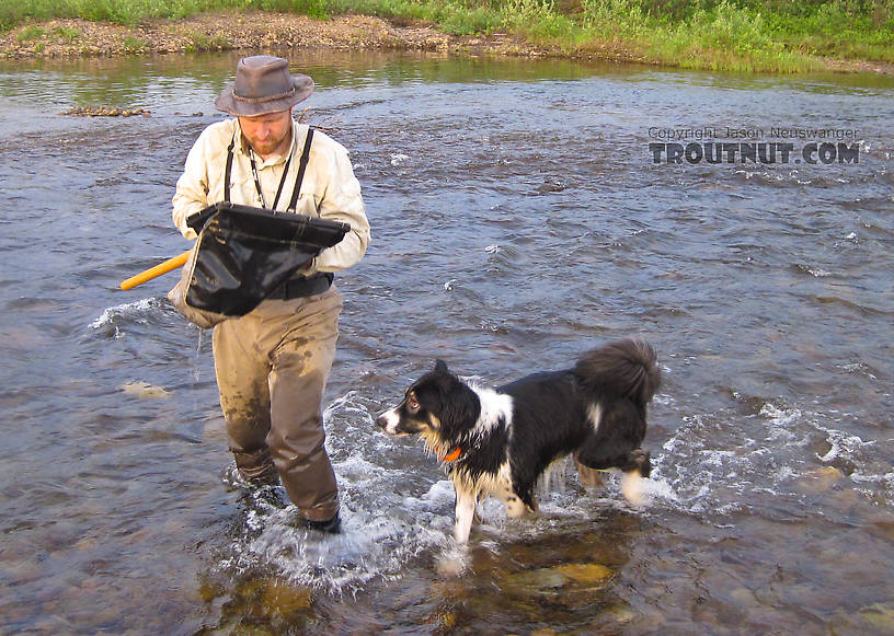 Inspecting the net with my intrepid sidekick. From Nome Creek in Alaska.