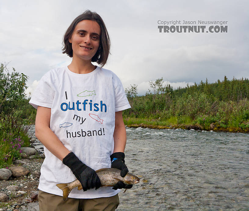 I think this is Lena's nicest grayling yet, around 16 inches. From the Gulkana River in Alaska.