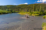 A few spawning sockeye salmon are visible near the lower left corner of this scene. From the Gulkana River in Alaska.