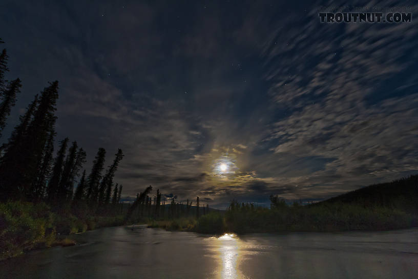 The upper Gulkana, moonlit shortly after midnight. From the Gulkana River in Alaska.