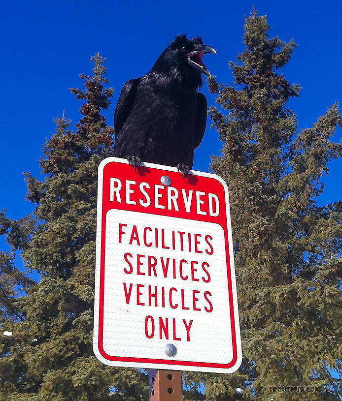 High upon a signpost rearing, down upon pedestrians jeering, 
