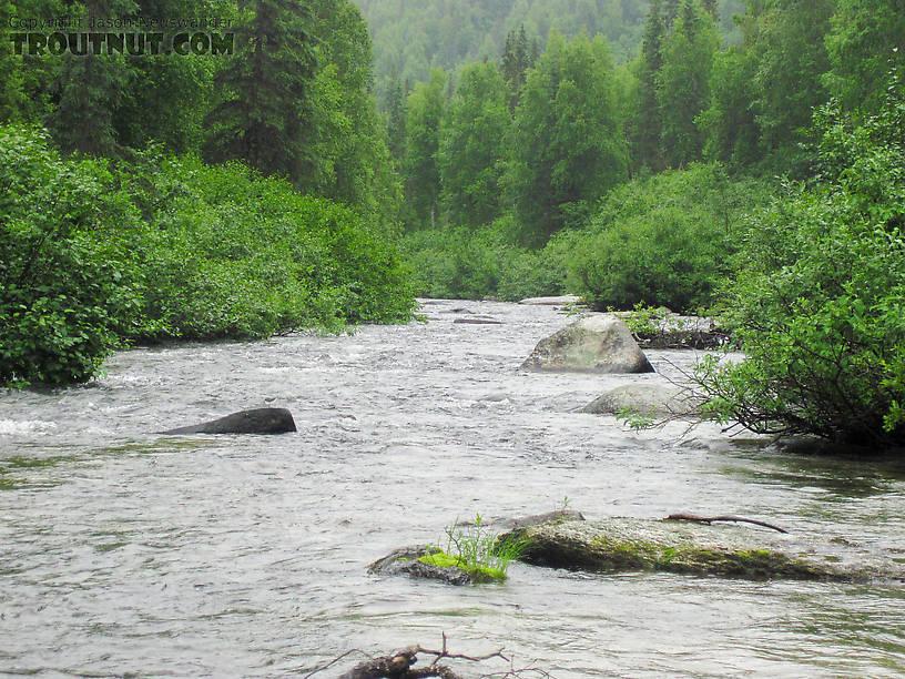 From Byers Creek in Alaska.