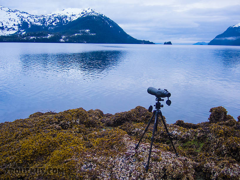 Spotting scope set up on the barnacles at low tide, looking for bears. From Prince William Sound in Alaska.
