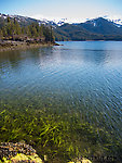Eelgrass showing at low tide. From Prince William Sound in Alaska.