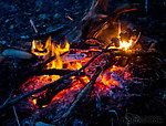 Bear backstraps roasting over the campfire. From Prince William Sound in Alaska.