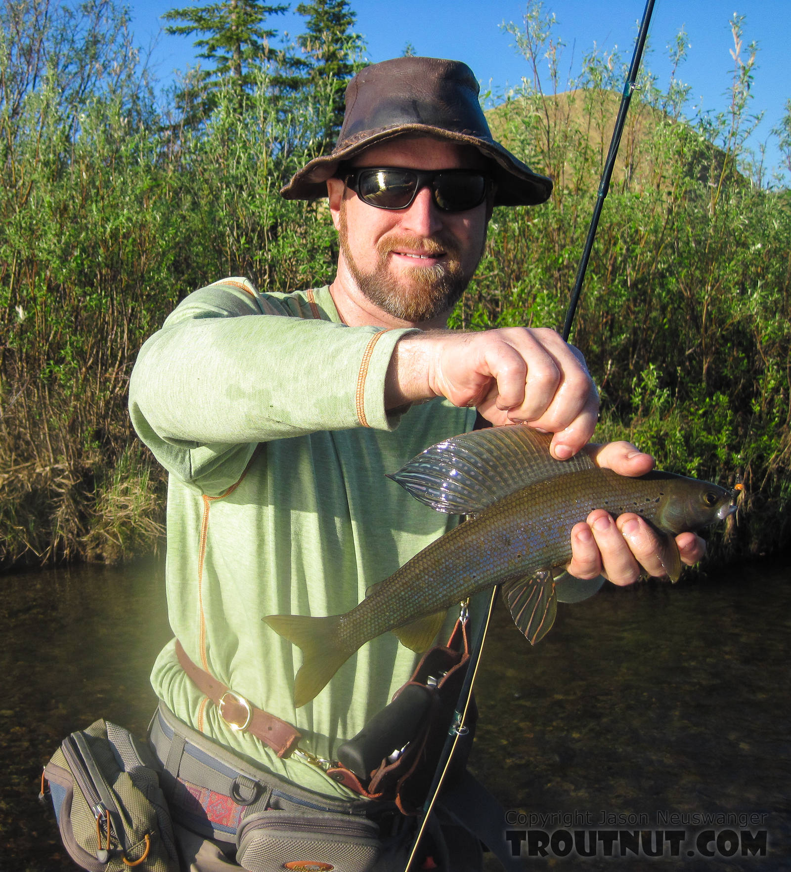 A very nice grayling for this small stream. From Nome Creek in Alaska.