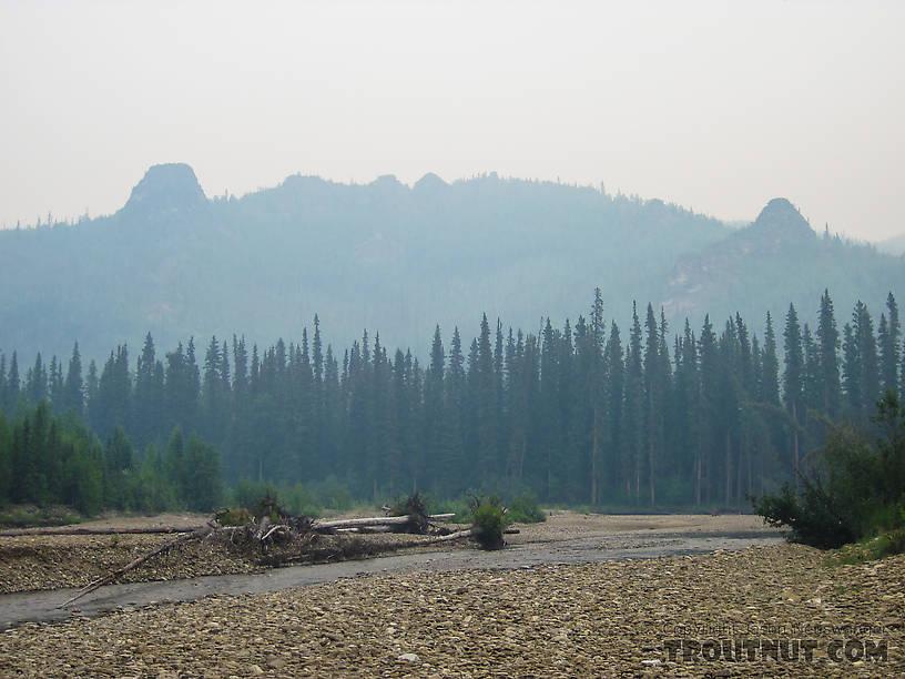 From the Chena River in Alaska.