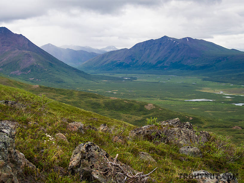 Upper Clearwater Creek valley From Clearwater Mountains in Alaska.