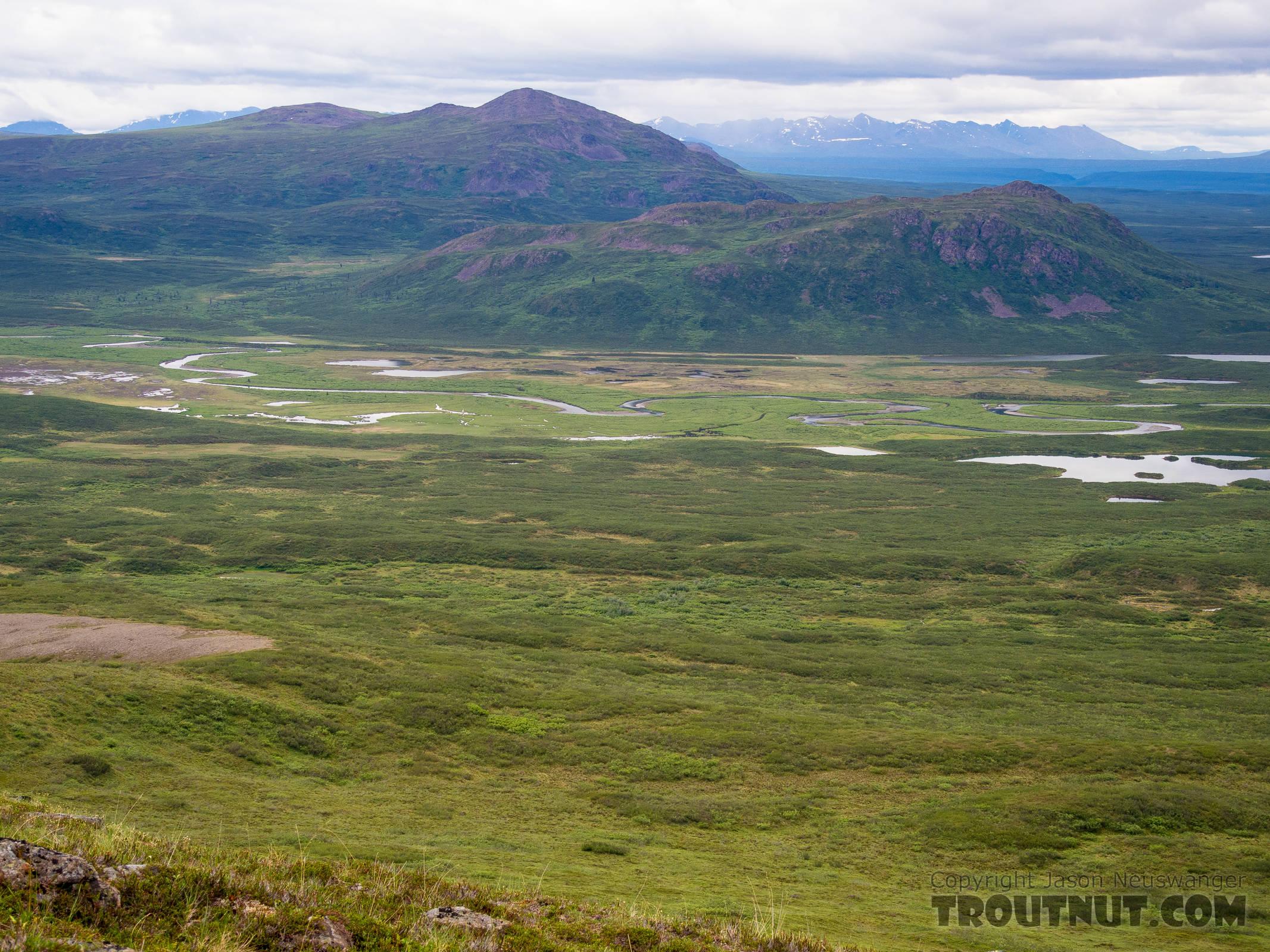 Clearwater Creek meanders in the distance. From Clearwater Creek in Alaska.