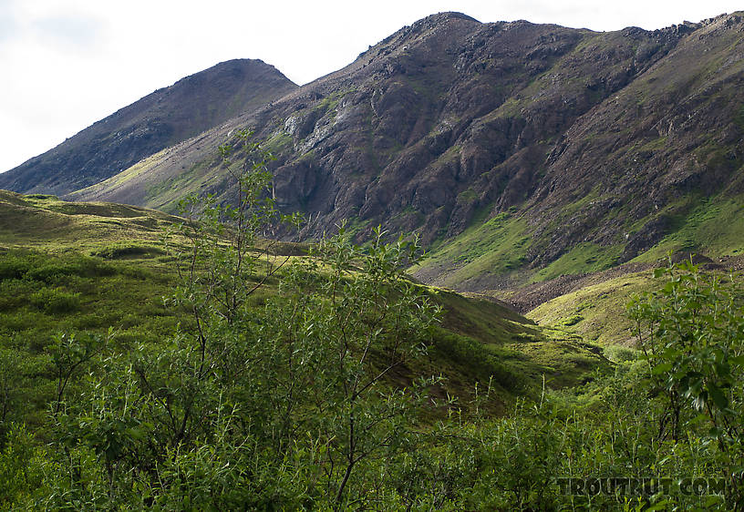 Looking up toward the pass we had to go through to start our second day hiking. From Clearwater Mountains in Alaska.