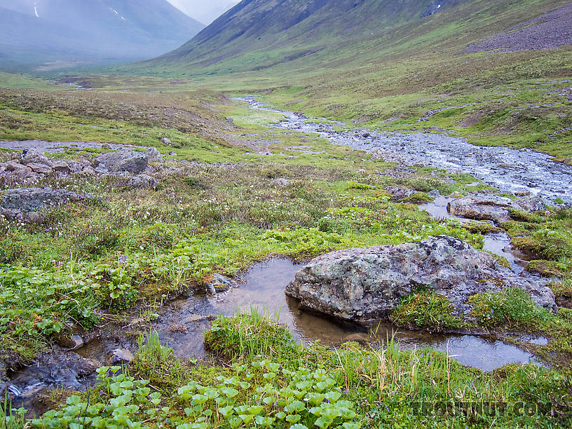 From the South Fork of Pass Creek in Alaska.