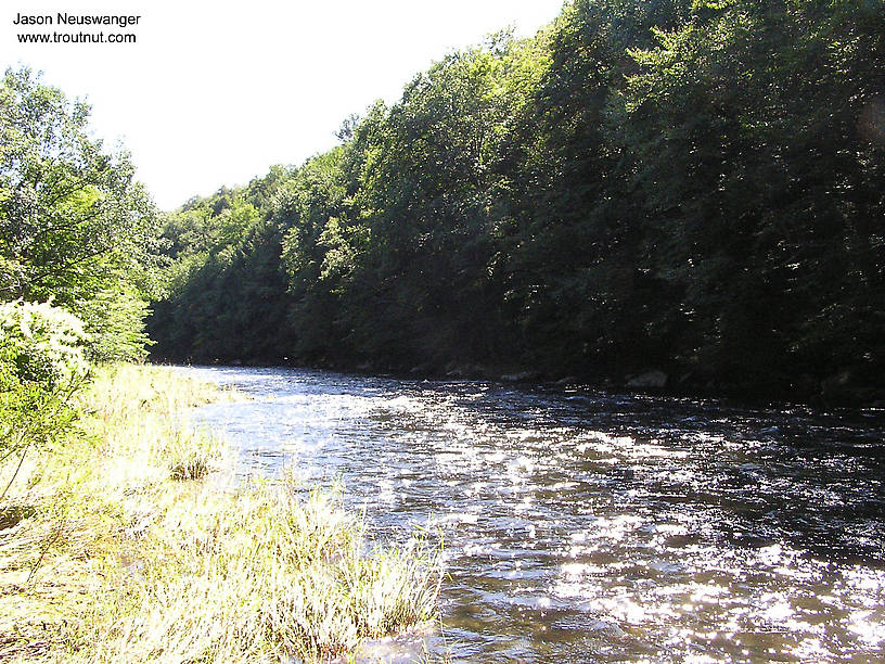 From the Beaverkill River (Upper) in New York.
