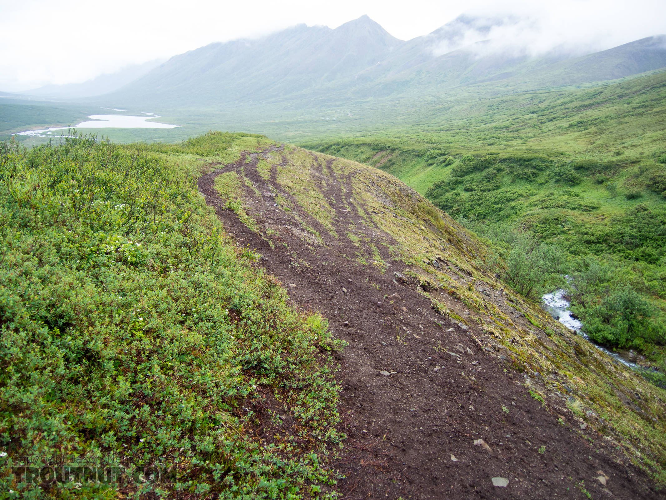 Caribou highway From Clearwater Mountains in Alaska.
