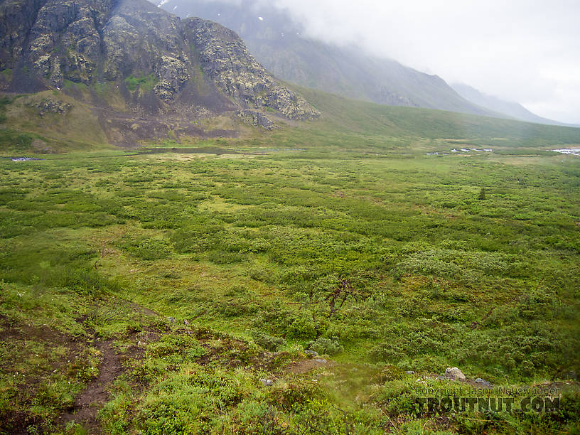 Brush to cross in Windy Creek valley From Clearwater Mountains in Alaska.