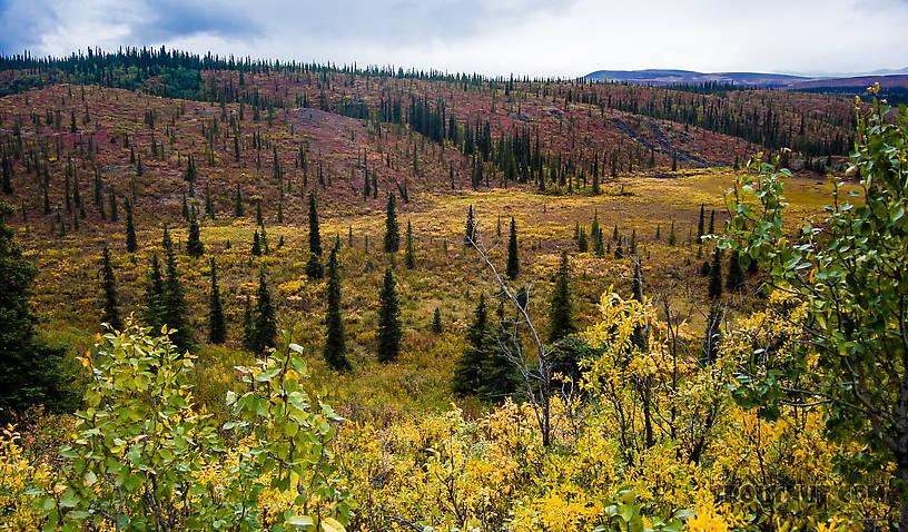 Lowland by Seattle Creek From Denali Highway in Alaska.