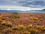Alaska Range and fall colors From Denali Highway in Alaska.