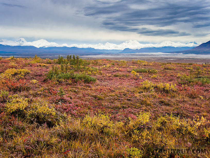 Alaska Range and fall colors From Denali Highway in Alaska.