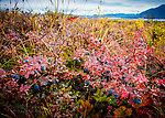 Blueberries and the Alaska Range From Denali Highway in Alaska.