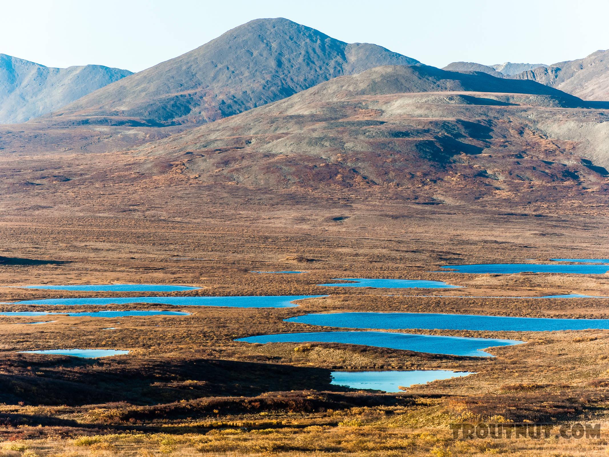 Kettle lakes From Denali Highway in Alaska.