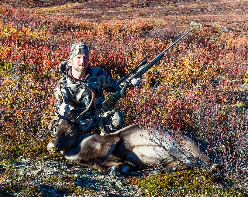 "Jason's 2013 Caribou. (Gross caption warning! read no further if easily disgusted!) The goo coming out the nose and mouth was a result of a very unusual bullet hit that scrambled the trachea/esophagus and left stomach contents oozing out the respiratory tract. The same shot clipped the top of the heart for an instant kill. This animal was not traditionally ""gut-shot"" at all, though, and I was able to keep all the meat untainted. From Clearwater Mountains in Alaska."