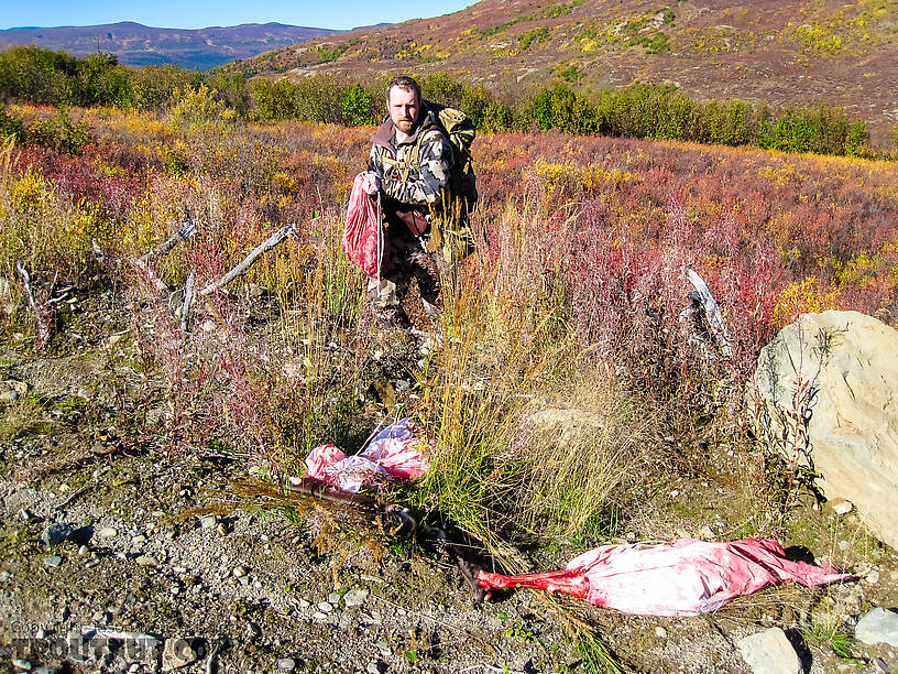Retrieving the last load of meat. Multiple groups of hunters had seen a pack of at least three wolves in this area the previous day, and a few days earlier. So I was a little bit nervous about leaving part of the meat overnight, and relieved when we found it untouched. It may have helped that a group of hunters had camped on the road not far away. From Clearwater Mountains in Alaska.