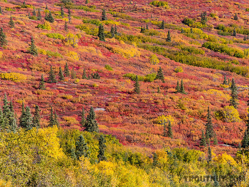 Tundra colors From Clearwater Mountains in Alaska.